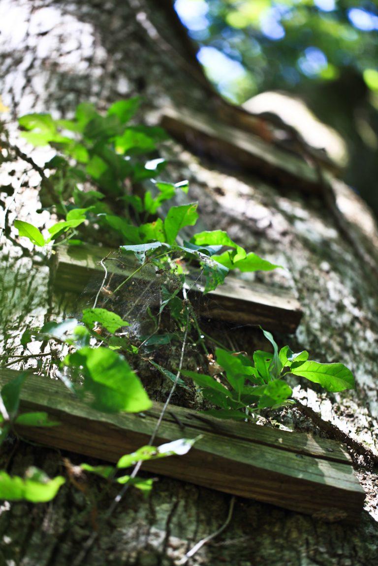 Childhood Overgrowth