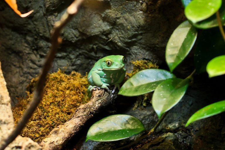 Monkey Frog Pt. 1
