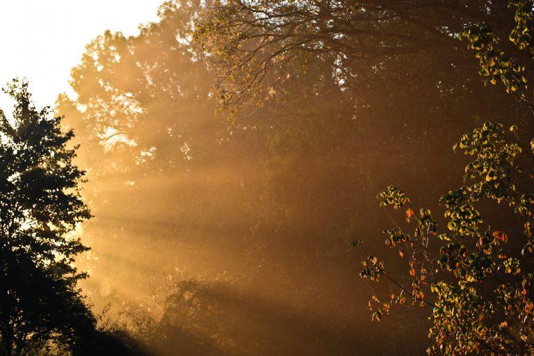Daybreak Fog