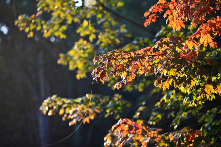 Webs and Leaves