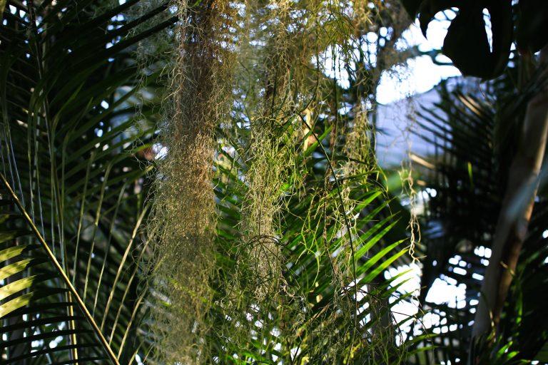 Tropical Overhang
