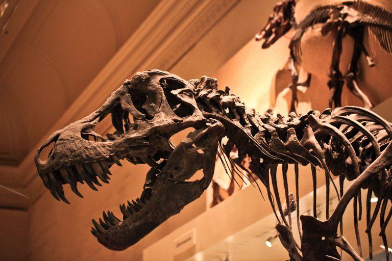 Tyrannosaurus Rex Pt.1