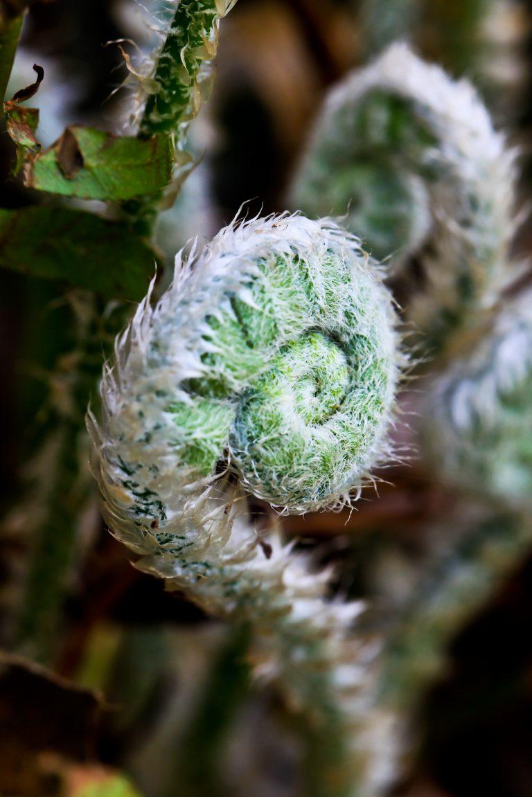 Fuzzy Fern