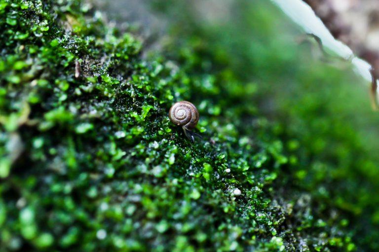 The Tiniest Snail