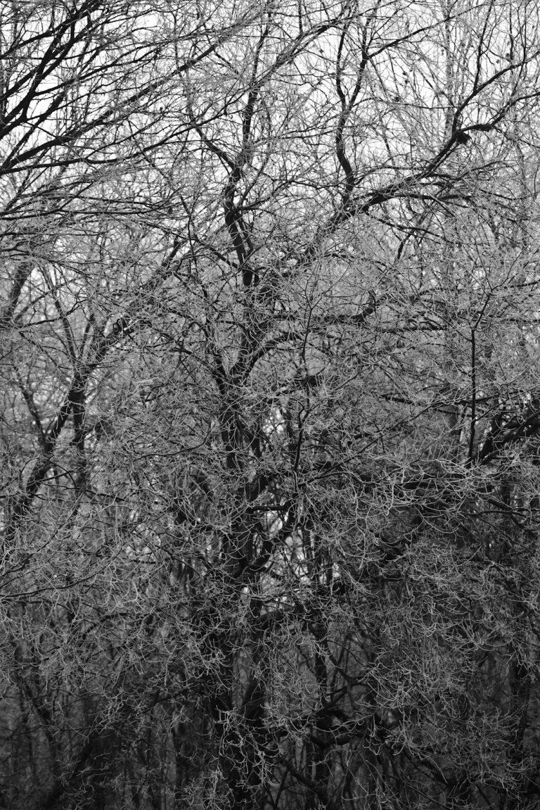 White Trees Pt.3