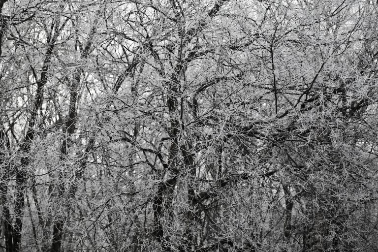 White Trees Pt.2