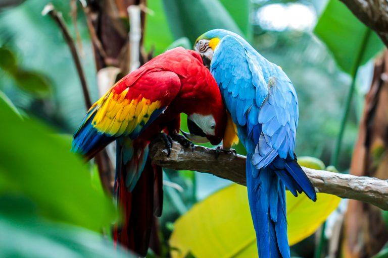 Macaw Love Pt.1