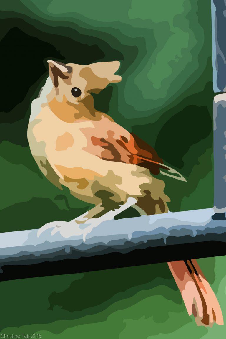 Juvenile Cardinal #2