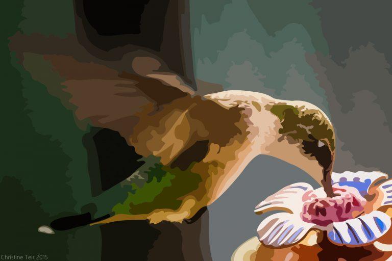 Roufus Hummingbird