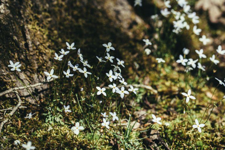 Little moss friends.